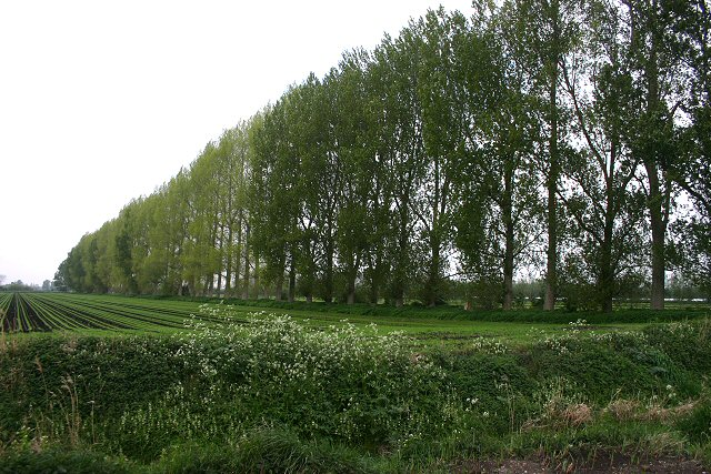agroforestry windbreaks and firebreaks